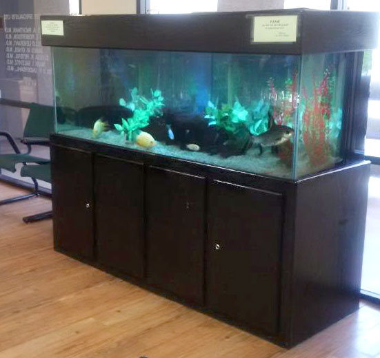 Phoenix freshwater aquarium maintenance services design for Fish tank cleaning service near me