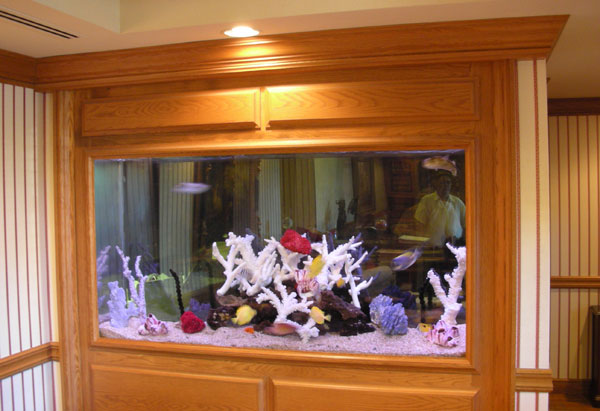 Commercial Aquarium